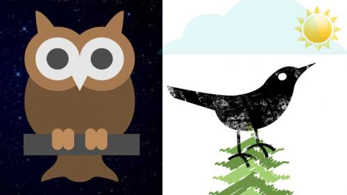Night owls and early birds have different personality traits